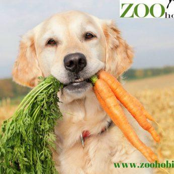 Zoohobis.lt – gyvūnų prekės