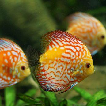 Kasdieninė akvariumo priežiūra. Ką būtina žinoti kiekvienam, turinčiam akvariumą.
