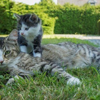 Kaip elgtis su kačiuku, kuris nuo mamos buvo atskirtas per anksti?