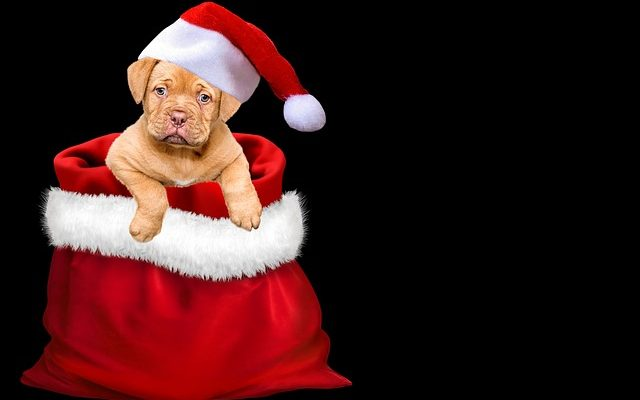 Kodėl keturkojis nėra tinkama dovana artėjant Šuns metams?