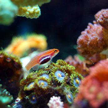 Akvariumo paruošimo pagrindai