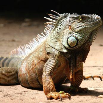 ROPLIAI - išskirtiniai egzotiniai gyvūnai namuose