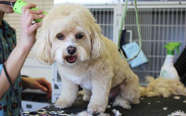 Gyvūnų šukuosenų mados tendencijos 2018 metais!