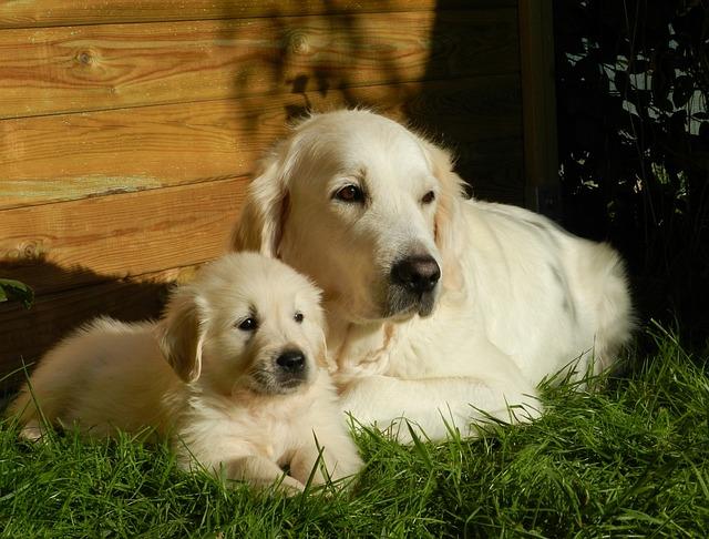 9 išskirtinės šunų veislės, kurias pamilsite iškart!