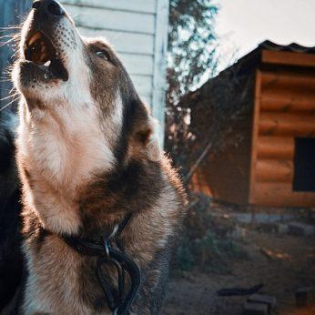 Ką reikėtų žinoti apie pasiutligę šunų augintojams