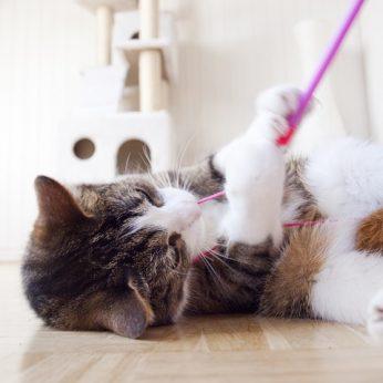 Katė drasko baldus? Patarimai kaip to išvengti