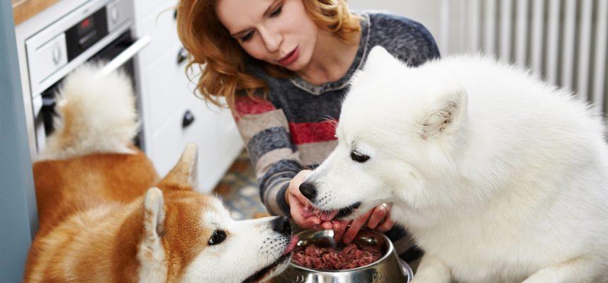 šuns širdies sveikatos dieta galvos svaigimo priežastis esant hipertenzijai