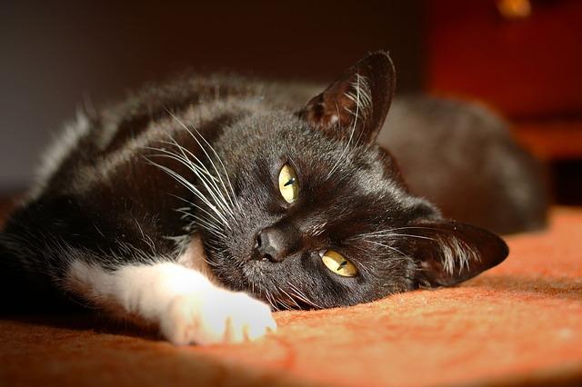 Neįkainojami patarimai kačių augintojams, kaip apsaugoti baldus
