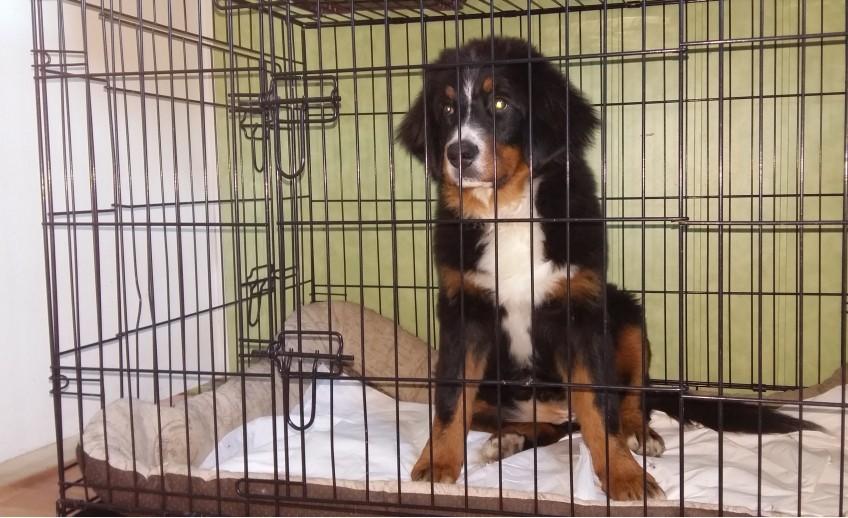 Stacionaro skyrius RUMINAVET veterinarijos klinikoje