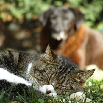 Sužinokite, ką sapnuoja gyvūnai