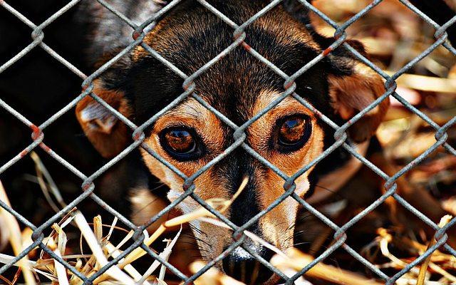 Ką daryti pastebėjus kenčiančius ar neprižiūrėtus gyvūnus?