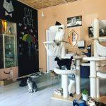 Kačių kavinė Vilniuje