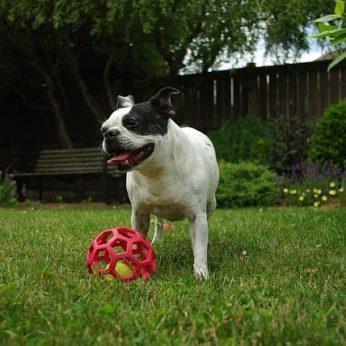 Kaip gyvūnai mato spalvas ir kodėl jūsų šuniui nereikia spalvoto kamuolio
