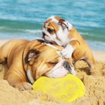 Karščio pavojai vasaros metu Jūsų gyvūnams