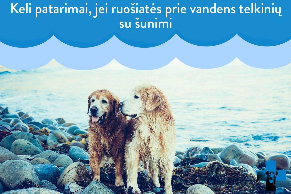 Keli patarimai, jei ruošiatės prie vandens telkinių su šunimi