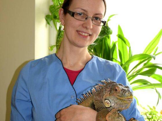 Smulkių ir egzotinių gyvūnų gydymas, chirurgija, ligų profilaktika, konsultacijos gydymo ir elgsenos klausimais, prekyba pašarais bei gyvūnų prekėmis.