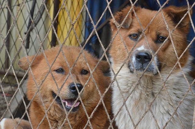 Kur kreiptis pastebėjus netinkamą elgesį su gyvūnais