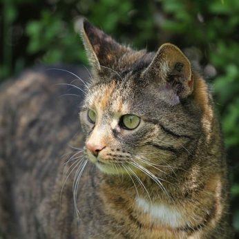 Naminė katė istorija, kilmė ir įdomūs faktai