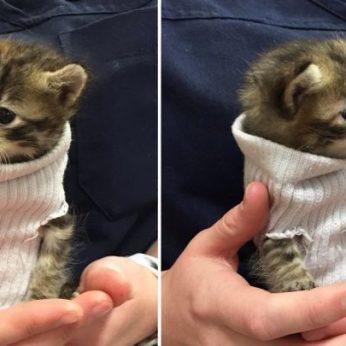 """Neapsigaukite """"Facebooktinkle plinta melagingas prašymas gelbėti kačiukus"""