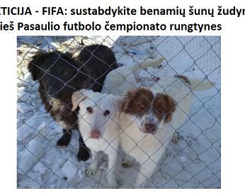 PETICIJA - FIFA: sustabdykite benamių šunų žudymą prieš Pasaulio futbolo čempionato rungtynes