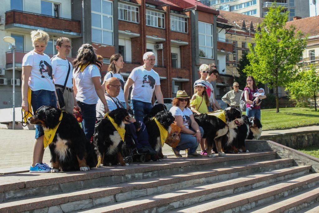 Pasaulinis pasivaikščiojimas su Berno zenenhundais Panevėžyje © L. Varanauskas
