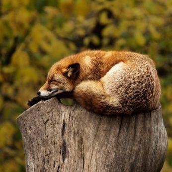 83 faktai iš gyvūnų pasaulio