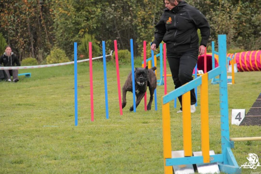 """""""Agility sportas ypač naudingas ryšiui su augintiniu ugdyti, nes trasoje, judant ir šuniui, ir šeimininkui, reikalingas geras susiklausymas – šuo pastebi kiekvieną judesį, gestą, net nežymų peties ar kojos pasukimą tam tikra kryptimi ir reaguoja"""", - šių užsiėmimų išskirtinumą aiškina A. Vileikienė."""
