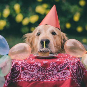 Ar švenčiate savo augintinio gimtadienį Juokingos jubiliatų fotografijos