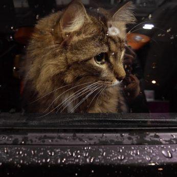 Ar galima autobuse / troleibuse vežti gyvūnus?
