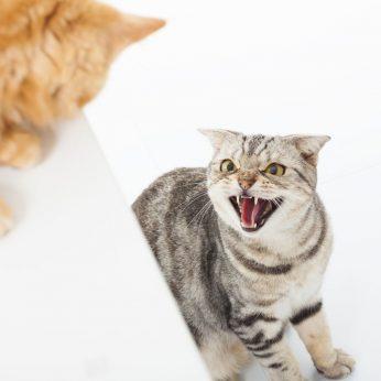 Kačių agresija kaip sutaikyti du priešus