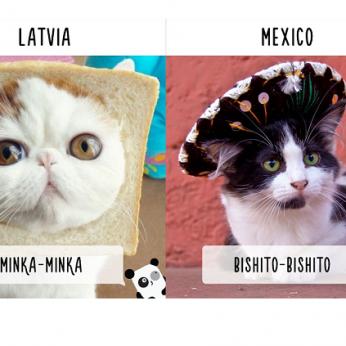 Kaip žmonės kviečia kates skirtingose šalyse