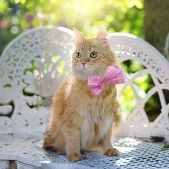 Katės charakteris priklauso nuo veislės