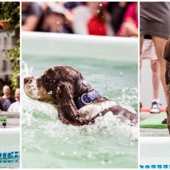 Lietuvoje toks turnyras – pirmas šunys kovojo dėl geriausio šokinėtojo į vandenį titulo