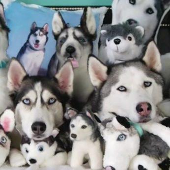 Pora išdykusių šunų pasislėpė nuo šeimininko ar pavyks juos pamatyti