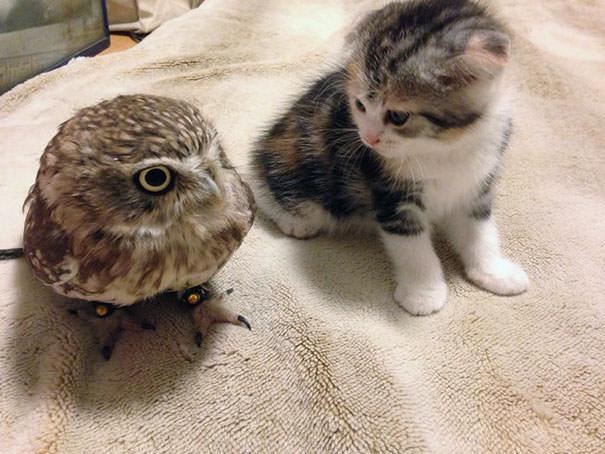 Sensacija Japonijoje: mažo kačiuko ir pelėdos jauniklio ypatinga draugystė.