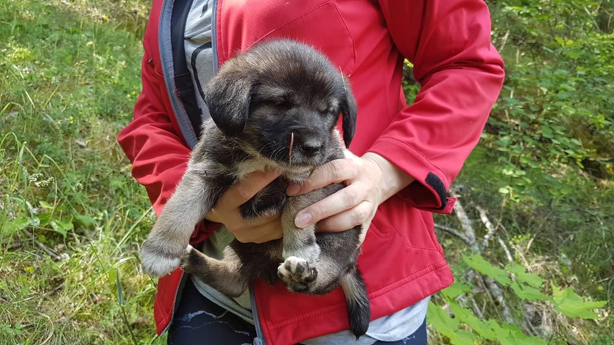 VILKPĖDĖJE į miško SKRUZDĖLYNĄ IŠMESTI 6 maži šuniukai