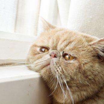 Šeimininkų elgesys, kuris labai skaudina kates