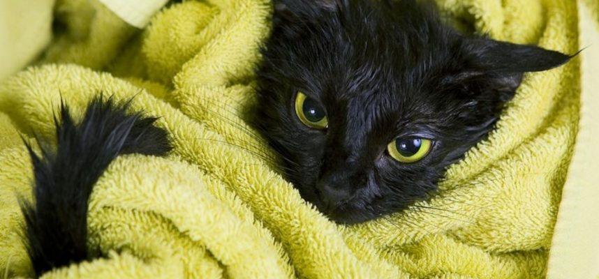 Ar žinojote, kodėl katės nekenčia vandens?