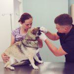 DiVet veterinarija