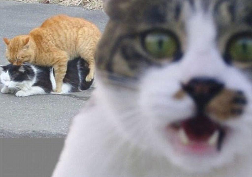Katės sugeba tiesiog meistriškai sugadinti gerus kadrus