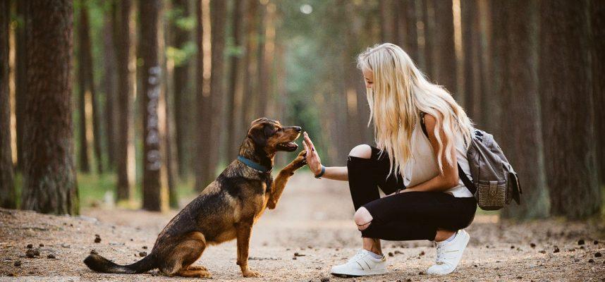 Mano Aliaska – man tobulas šuo