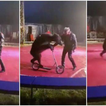 Tėvas pasibaisėjo Klaipėdoje vykusiu cirko pasirodymu: verčiau neleiskite ten savo vaikų!