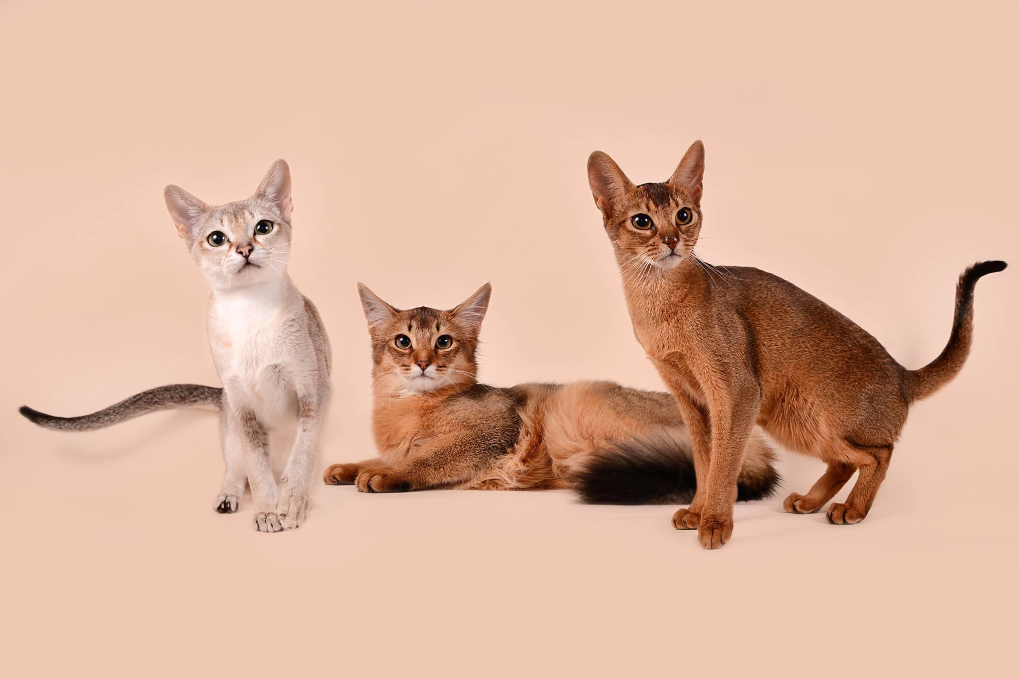 Mūsų tikslas gauti sveikus, gražius, švelnius kačiukus ir kad naujiems namams jie neštų meilę, šilumą ir žaismingumą. Visada bendraujame su naujais šeimininkais, pataremia ir konsultuojame.