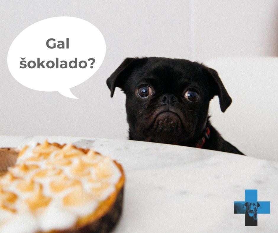 Šunų apsinuodijimas šokoladu