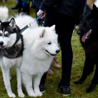 Šunų rinka: skelbia populiariausių kainas ir tendencijas