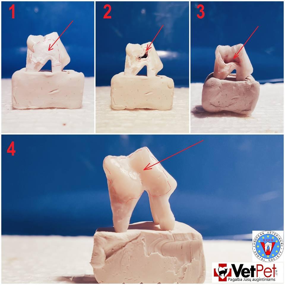 Ar žinojote, kad ne visus sugedusius dantis reikia šalinti, juos galima ir gydyti, lygiai taip pat kaip ir žmonių odontologijoje?