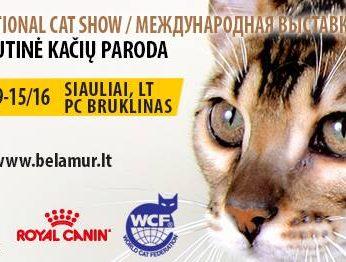 International Belamur cat show | Nemokama kačių paroda