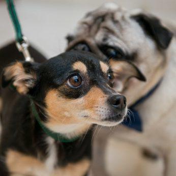 Šunų elgesio abėcėlė apsaugos nuo nelaimės ją žinoti turi kiekvienas