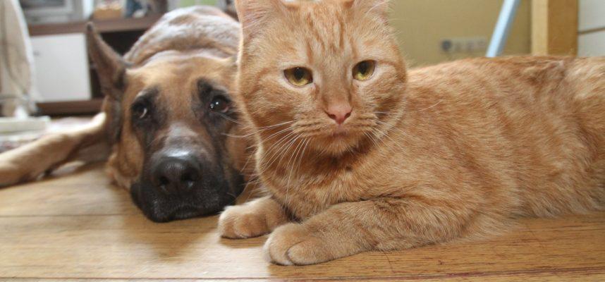 Atsakė, kaip parodyti meilę gyvūnams