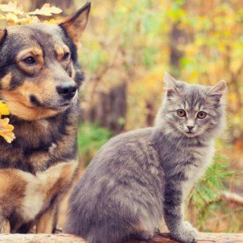 Būtina apsauga naminiams augintiniams ko nežinojote apie gyvūnų ženklinimą